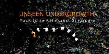 unseen_undergrowth__macritchie_rainforest_sg_-_youtube